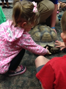 Petting a tortoise at the library's Critter Chat